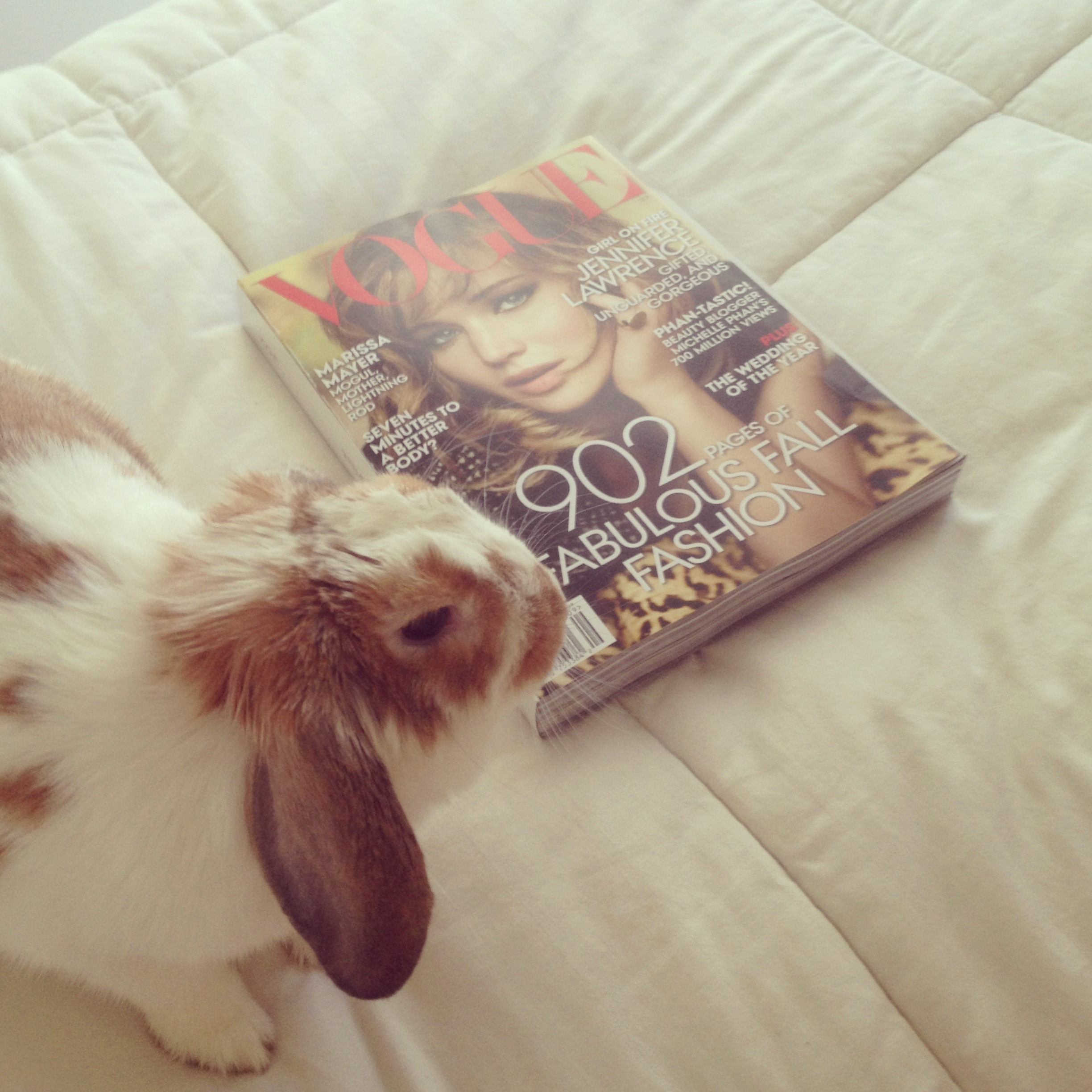 bunny and vogue